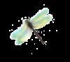 believedragonflywebsitelogo